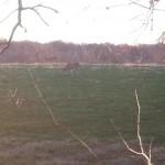 Resize_fieldpics02