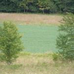 Resize_landscape01