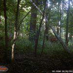 creek 17 075